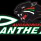 Аугсбургер Пантерс